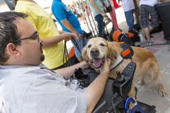 Guide and assistance dog. Sofia, Bulgaria - June 21, 2016: An assistance dog is shown during a performance before given to an individual with a disability. The Royalty Free Stock Photography