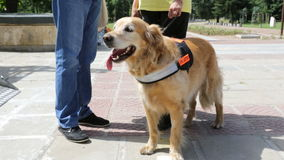 Guide and assistance dog. An assistance dog is trained to aid or assist an individual with a disability. Many are trained by an assistance dog organization, or stock video footage