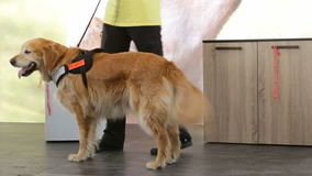 Guide and assistance dog. An assistance dog is trained to aid or assist an individual with a disability. Many are trained by an assistance dog organization, or stock video