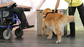 Guide and assistance dog. An assistance dog is trained to aid or assist an individual with a disability. Many are trained by an assistance dog organization, or stock footage