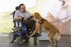 Guide and assistance dog wallet. Sofia, Bulgaria - June 21, 2016: An assistance dog is shown during a performance before given to an individual with a disability stock photos