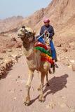 Guide de chameau images stock