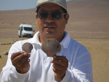 Guide demonstrates mollusk shells forming relict surface of Atacama Desert in Peru, South America Stock Photo