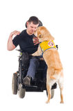 Guide Dog. Labrador guide dog picked up his owner's keys from the ground and hands them to him stock image