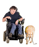 Guide Dog. Labrador guiding bringing his leash to his owner Stock Photography