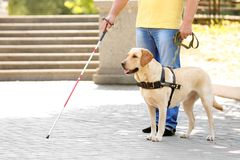 Guide dog helping blind man. In the city stock photos
