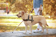 Guide dog helping blind woman. In park royalty free stock photo