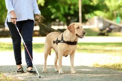 Guide dog helping blind woman. In park stock photography