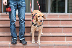 Free Guide Dog Is Helping A Blind Man Stock Photo - 93326830