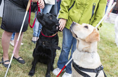 Guide dogs Royalty Free Stock Photo
