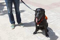 Guide et chien d'aide Photos stock