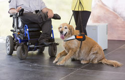 Guide et chien d'aide Image stock