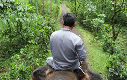 Guide Rides on the Back of an Elephant Royalty Free Stock Image