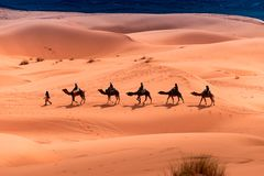 Camel ride through the desert royalty free stock photography