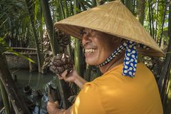 A guide showing a water coconut, on a tour of the water coconut forest, in Hoi An. Hoi An, Vietnam January 11, 2017:A boat guide posing with a water coconut, in royalty free stock photos