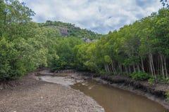 Guidez seul dans la forêt de palétuvier chez Pranburi Forest National Park, Prachuap Khiri Khan, Thaïlande images libres de droits