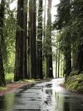 Guidi attraverso la foresta immagini stock libere da diritti