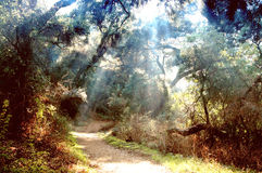 Guiding Light 2. Guided Down a Wooded Trail by a Divine Light Royalty Free Stock Photography