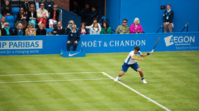 Guido Pella Argentinian Tennis player. On grass Royalty Free Stock Image