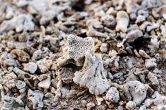 Guijarro en la playa Fotos de archivo