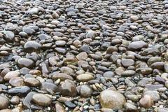 Guijarro mojado gris grande en la orilla del río Imagen de archivo