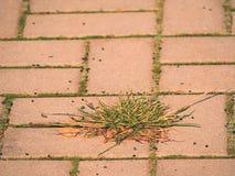 Guijarro que pavimenta el sendero con un manojo de hierba, adoquines concretos Textura de la trayectoria de piedra vieja Fotografía de archivo