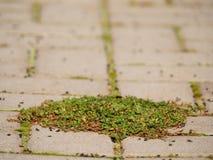 Guijarro que pavimenta el sendero con un manojo de hierba, adoquines concretos Textura de la trayectoria de piedra vieja Imágenes de archivo libres de regalías