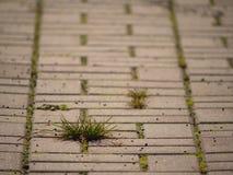 Guijarro que pavimenta el sendero con un manojo de hierba, adoquines concretos Textura de la trayectoria de piedra vieja Imagenes de archivo