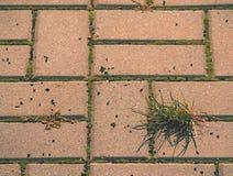 Guijarro que pavimenta el sendero con un manojo de hierba, adoquines concretos Textura de la trayectoria de piedra vieja Fotos de archivo
