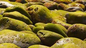 Guijarros con el musgo en la playa Foto de archivo