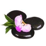 Guijarros del zen. Piedras del balneario y flor rosada de la orquídea con las hojas verdes Foto de archivo libre de regalías