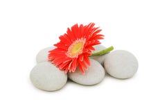 Guijarros rojos de la flor y del balneario Fotos de archivo libres de regalías