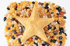 Guijarros y estrellas de mar. Fotos de archivo