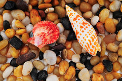 Guijarros y shell del mar. Fotografía de archivo libre de regalías