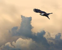 Águila de pescados africana contra puesta del sol imponente Fotografía de archivo