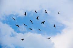 águilas que vuelan en cielo Imagen de archivo libre de regalías