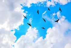 águilas que vuelan en cielo Foto de archivo libre de regalías