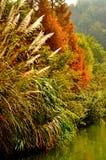 Guilin landskap 011 Arkivbilder