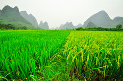 Guilin Li river landscape in Yangshuo China Royalty Free Stock Photos