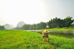 Guilin Park and Karst rocks Yangshuo Stock Photos