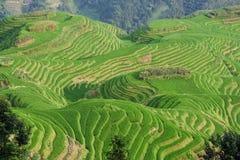 Guilin-Reis-Feld-Terrasse Stockfotografie