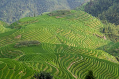 Guilin Rice Field Terrace Royalty Free Stock Images
