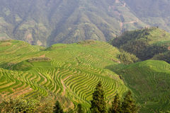 Guilin Rice Field Terrace Stock Image