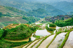 Guilin Rice Terraces Stock Images