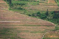 Guilin-Terrasse Stockfotos