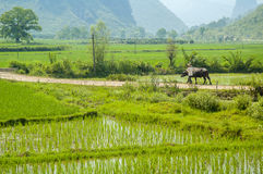 Guiling landscape Royalty Free Stock Images