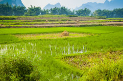 Guiling landscape with rice fields Stock Photo