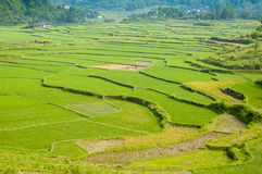 Guiling landscape with rice fields Royalty Free Stock Photography