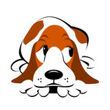 Guilty Dog Clipart. Cute guilty look Basset hound lying down with chin on paws Stock Image