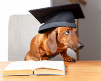 Guilty looking scholar Royalty Free Stock Photo